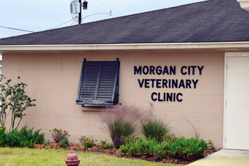 Morgan City Veterinary Hospital | Morgan City, LA 70380